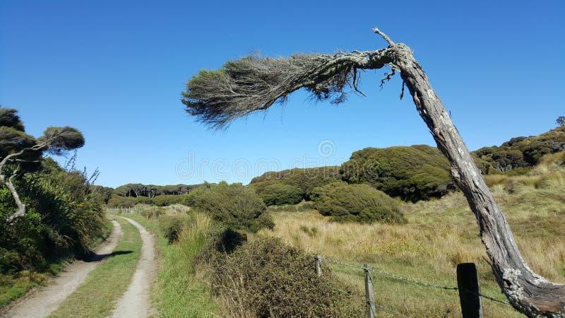 风塑造树在倾斜点,新西兰的美好的形式 库存照片