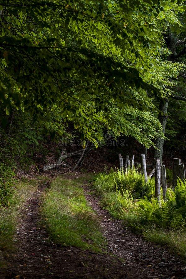 风景一条车道土路-西维吉尼亚 库存图片