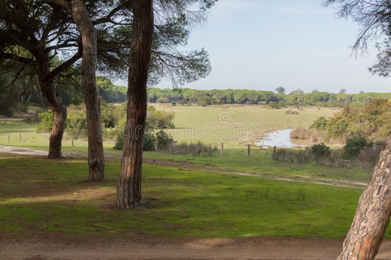 风景从一个观点在Doñana 库存照片