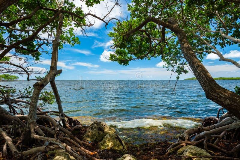 风景佛罗里达群岛 库存照片
