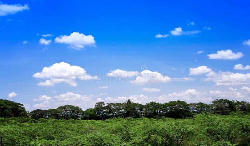 风景农村泰国,在明亮的天空蔚蓝背景的白色云彩小组样式在夏日和绿色植物,树中 免版税库存照片