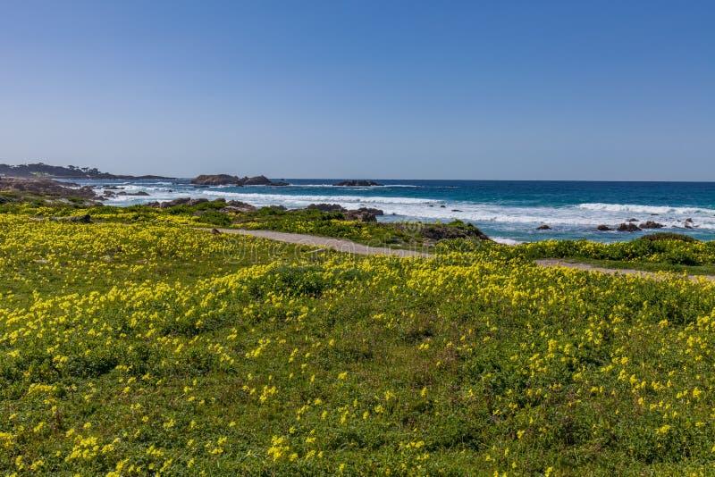 风景加利福尼亚海岸和野花 免版税库存照片