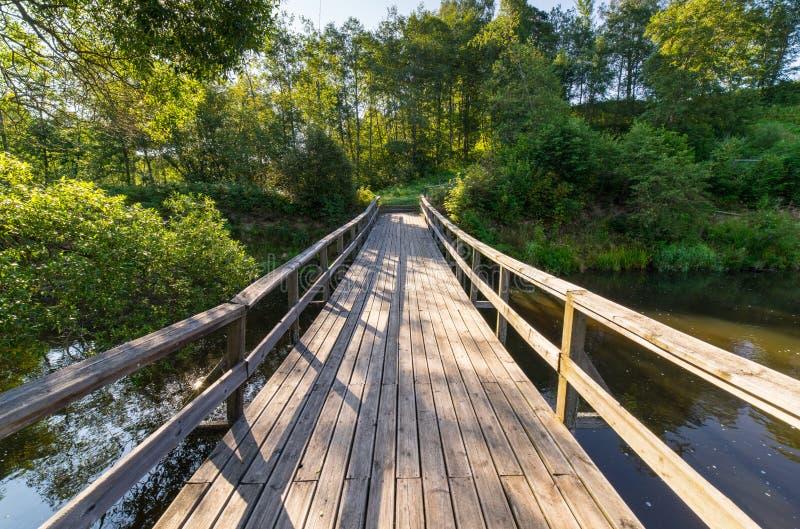 风景和美丽的旅游业足迹在森林临近河 免版税库存照片