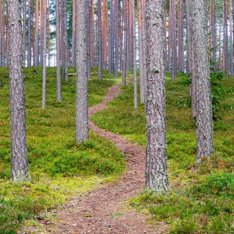 风景和美丽的旅游业足迹在森林临近河 库存图片