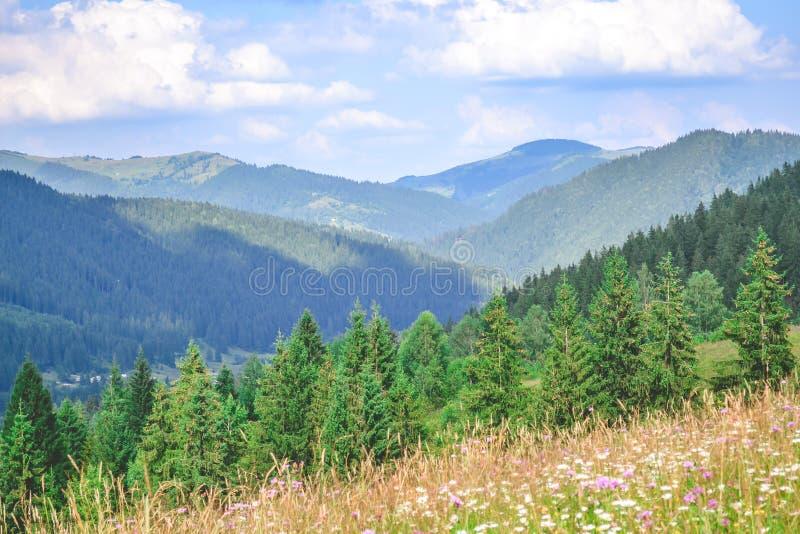 风景喀尔巴阡山脉 免版税库存照片