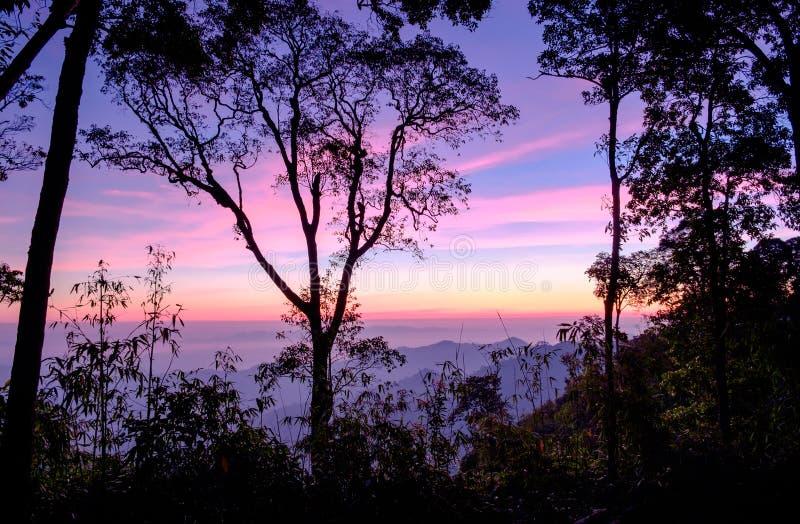 风景在国家公园的森林日出蓝色紫色 免版税库存图片
