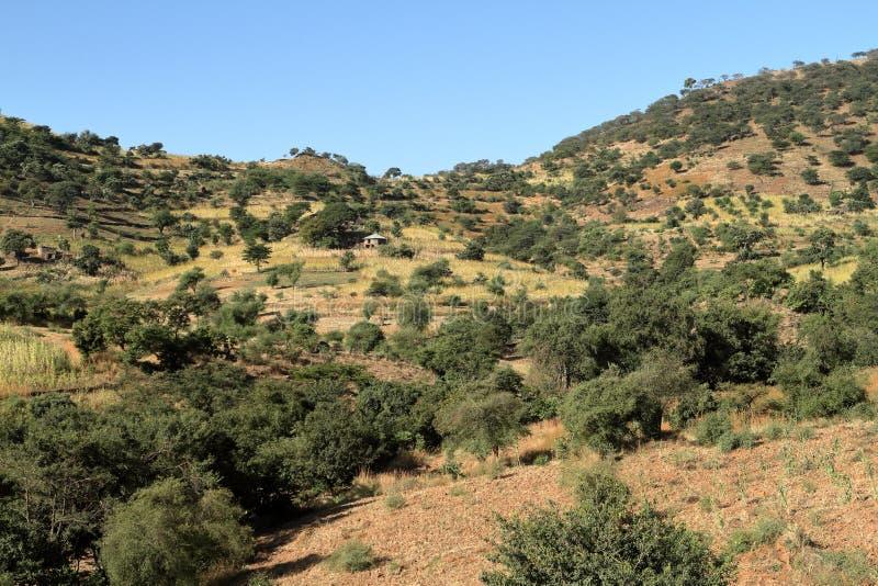 风景在埃塞俄比亚的阿姆哈拉地区 库存图片