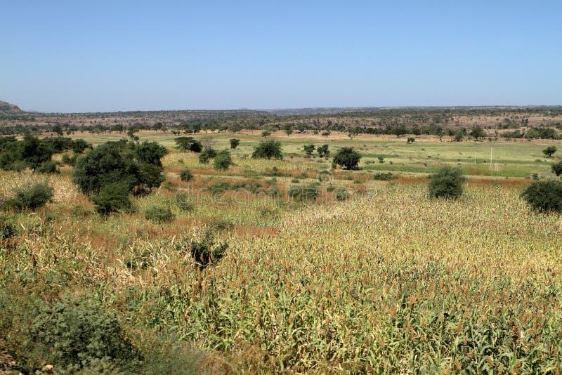 风景在埃塞俄比亚的阿姆哈拉地区 免版税库存图片