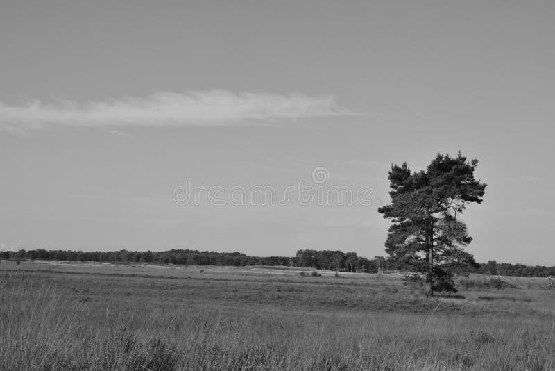 风景在自然保护的比利时 图库摄影