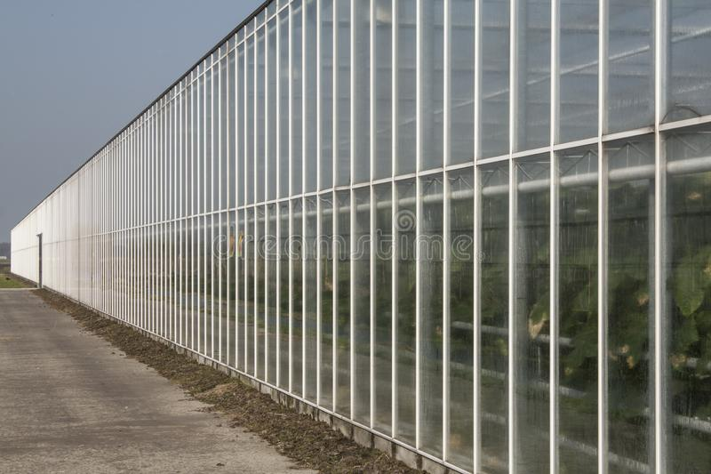 风景在荷兰,荷兰风景 免版税图库摄影