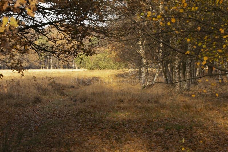 风景在荷兰,荷兰风景 库存照片