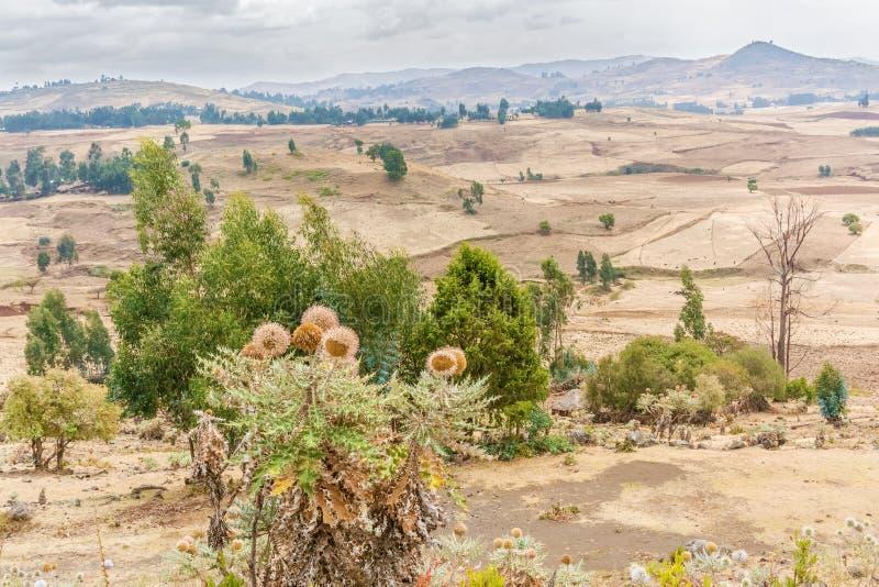 风景在阿里Doro附近的埃塞俄比亚 免版税图库摄影