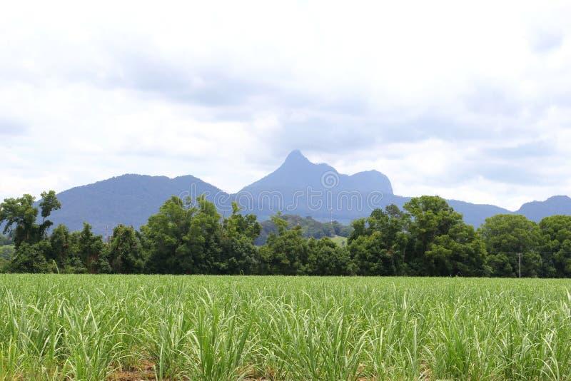 风景在Wollumbin国家公园,澳大利亚 库存图片