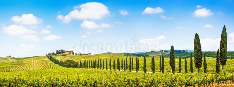 风景托斯卡纳风景全景与葡萄园在Chianti地区,托斯卡纳,意大利的 库存照片