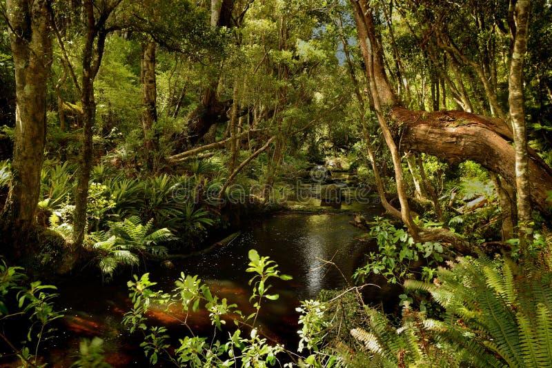 风景新西兰-原始绿色森林在新西兰 免版税库存图片
