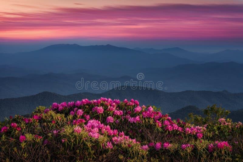 风景日落,卡托巴人杜鹃花,阿巴拉契亚山脉 免版税库存图片
