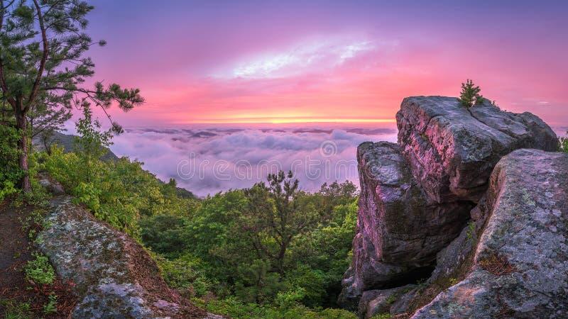 风景日落,杉木山行迹,肯塔基 免版税库存图片