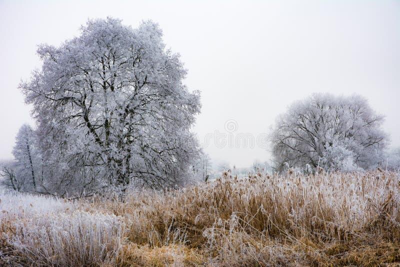 风景有雾的冬天与结霜的树 免版税库存图片