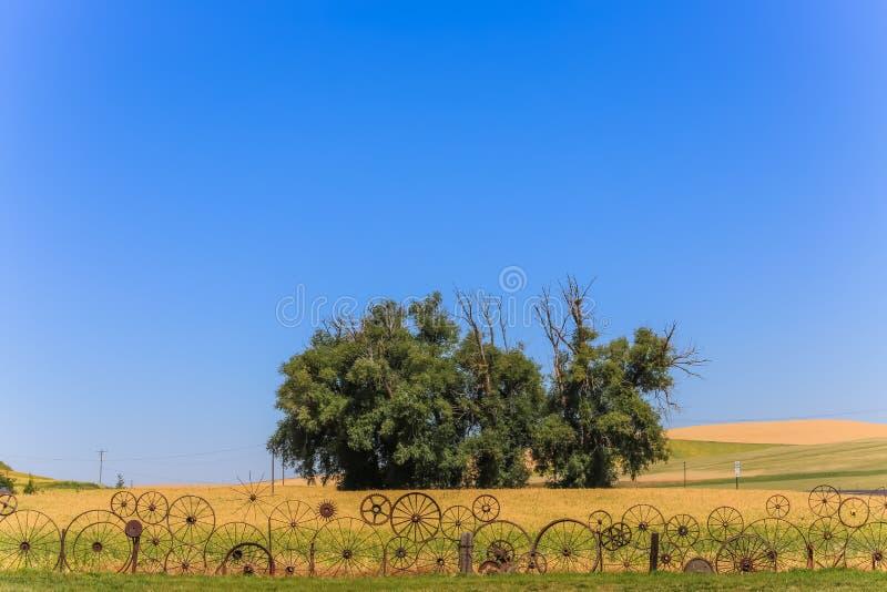 风景树 图库摄影