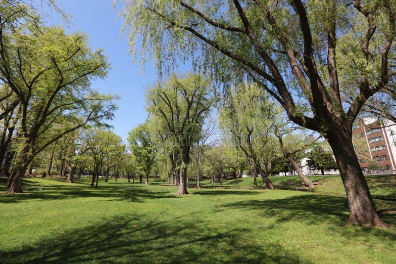 风景校园在北海道大学日本的 免版税库存图片