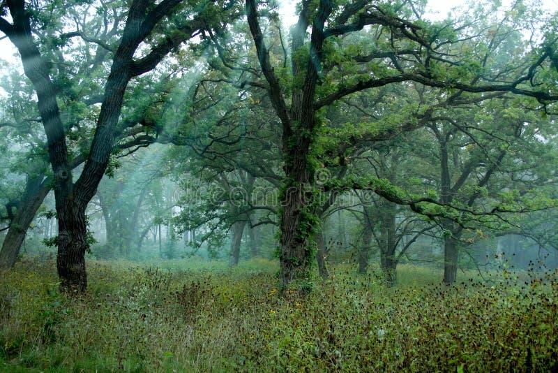 风景森林的草甸 库存图片