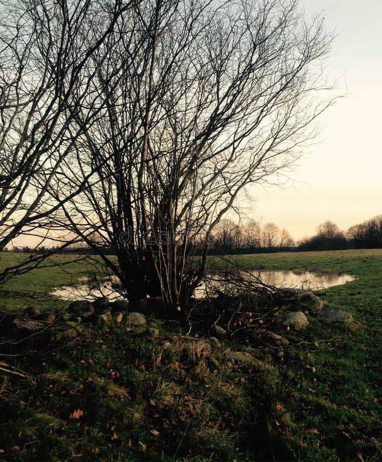 风景水、树和领域 免版税库存图片