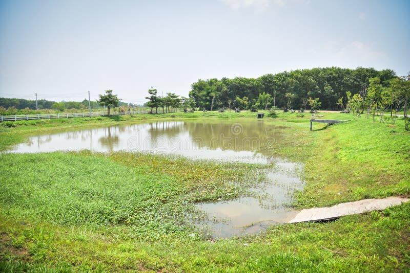 风景池塘水 库存照片