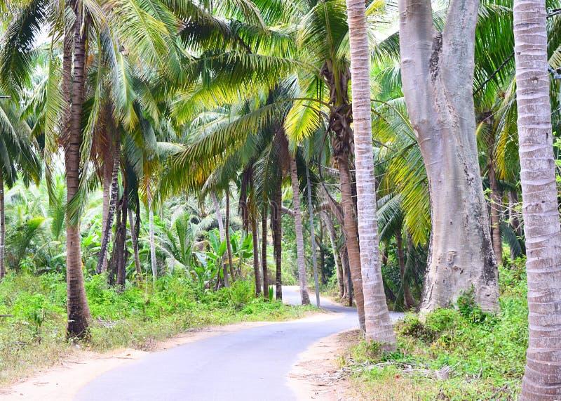 风景沥青混凝土路通过棕榈树、椰子树和绿叶-尼尔海岛,安达曼,印度 免版税库存图片