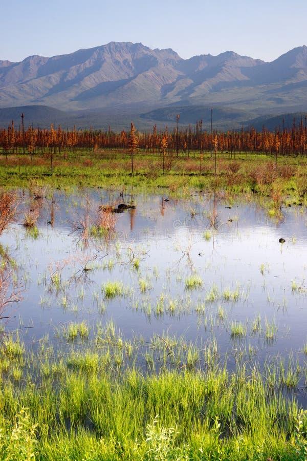 风景沼泽水全景山风景在内地阿拉斯加 免版税库存图片