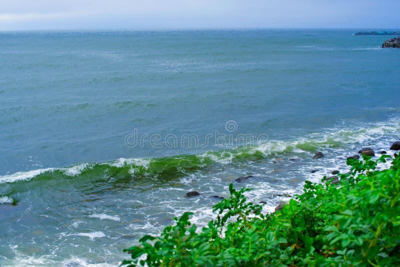 风景海岸多岩石的海滩海小卵石挥动泡沫灌木玫瑰果自然海景 库存照片
