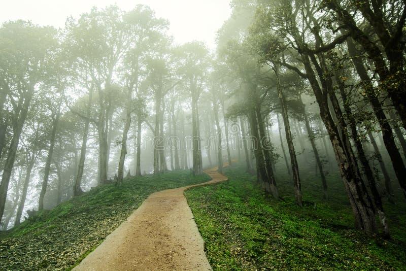 风景深热带森林密林Janjehli,喜马拉雅山,印度 免版税库存图片