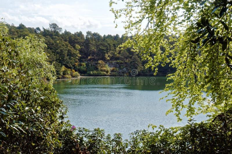 风景湖和森林地蓝色水池的,多西特,英国 免版税图库摄影