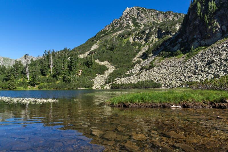 风景用鱼Vasilashko湖,皮林山脉清楚的水山,保加利亚 免版税库存照片