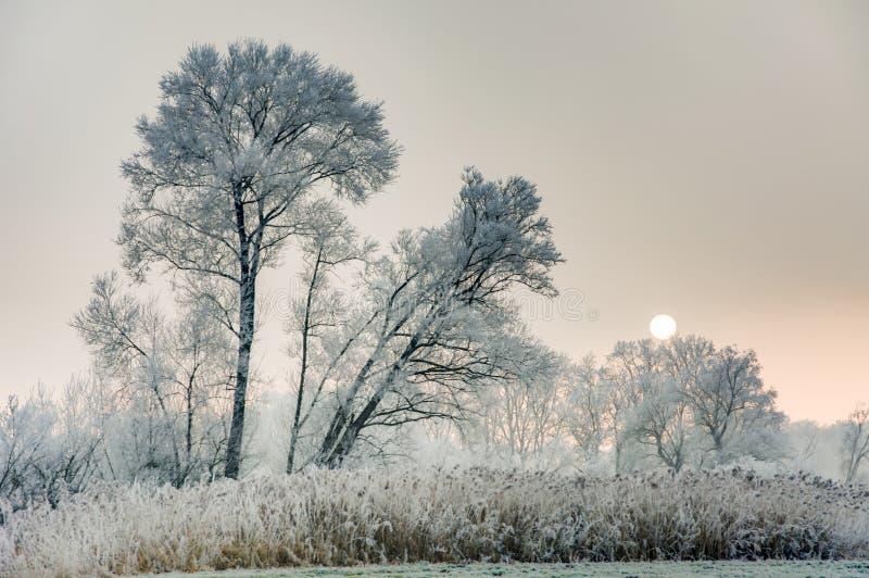 风景的冬天与forsted树 免版税库存图片