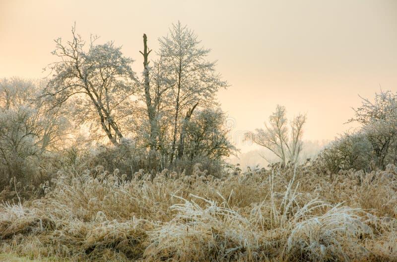 风景的冬天与forsted树 库存照片