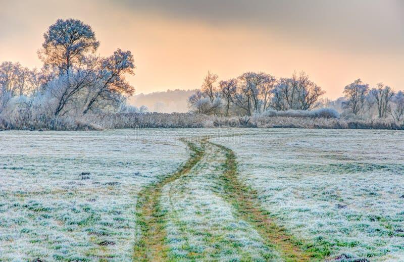 风景的冬天与forsted树 图库摄影