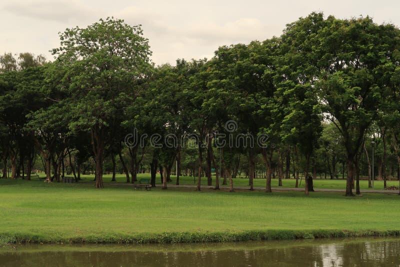 风景看法在湖的一个公园 库存照片