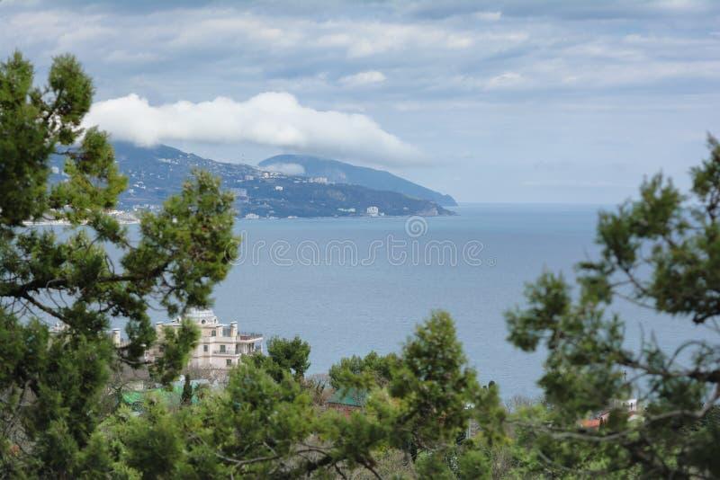 风景看法通过金钟柏分支对Ayu Dag山 免版税库存图片