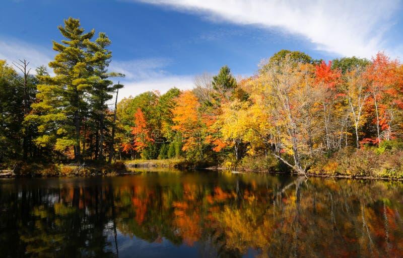 风景秋天树颜色在一条镇静河反射 库存图片