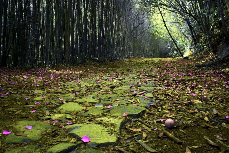 风景紫斑症 库存照片