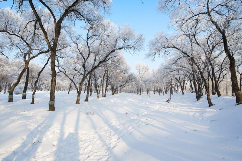 风景纯净的白色的雪和软的霜 库存图片