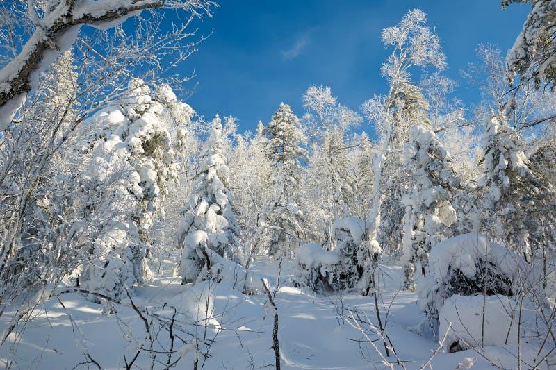 风景美好的冬天在雪山 库存照片