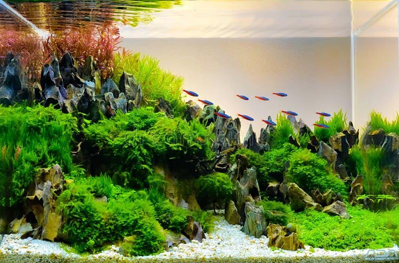 风景自然样式水族馆坦克的图象 免版税图库摄影