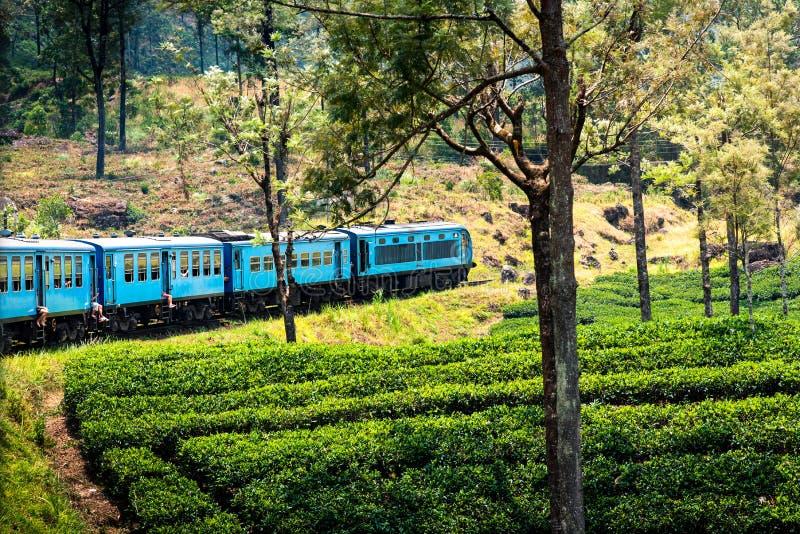 风景蓝色火车通过斯里兰卡高地 免版税图库摄影