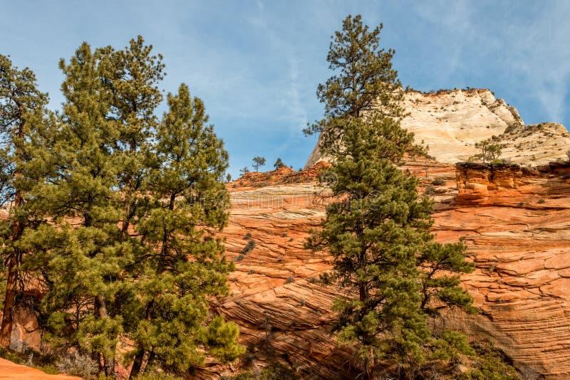 风景锡安国家公园风景 免版税图库摄影