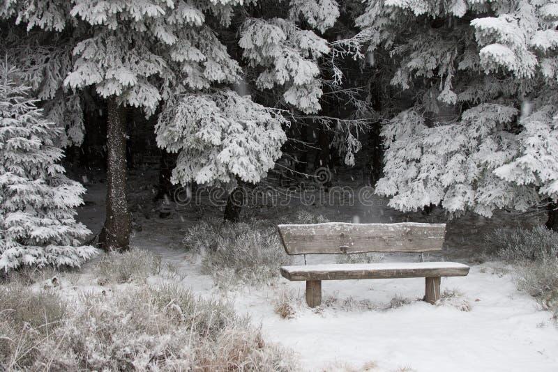 风景雪冬天 库存照片
