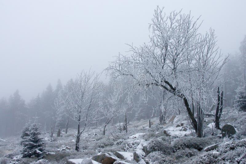 风景雪结构树冬天 免版税库存照片