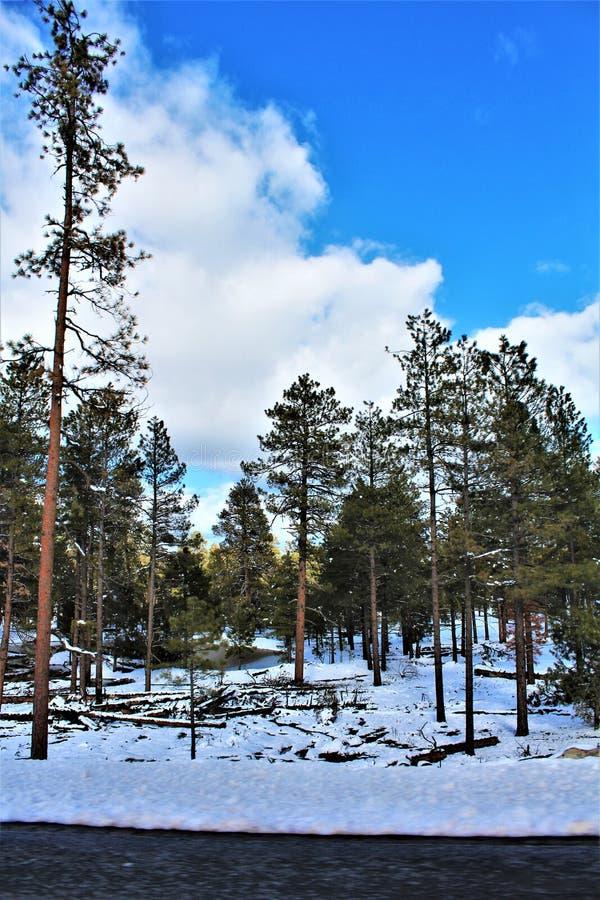 风景风景,马里科帕县,橡树溪峡谷,亚利桑那,美国 库存照片
