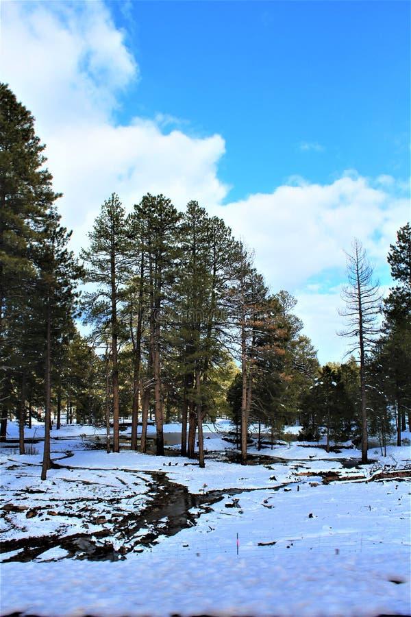 风景风景,马里科帕县,橡树溪峡谷,亚利桑那,美国 图库摄影