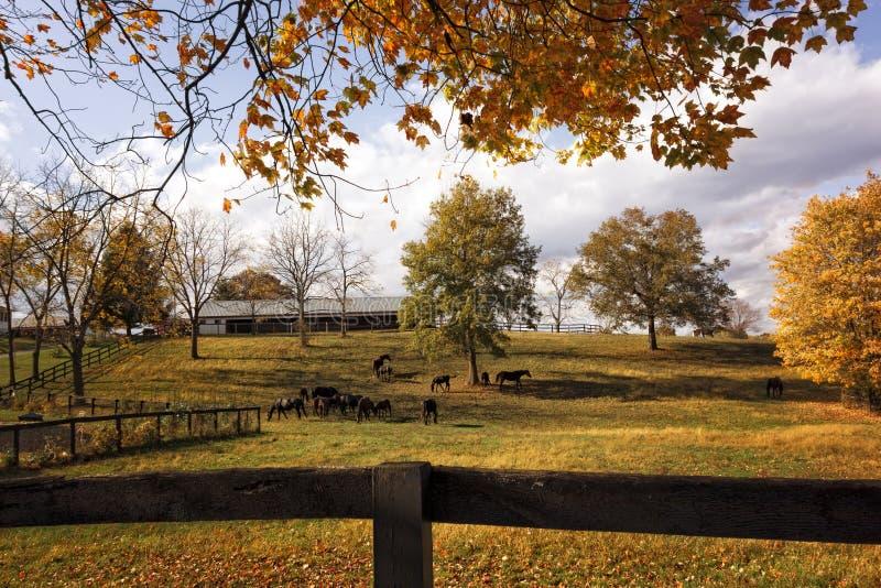 风景马农场在秋天 库存照片